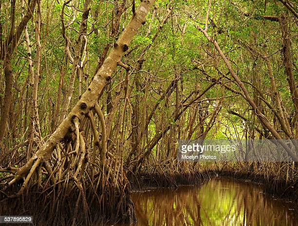 Mangroves in Everglades National Park