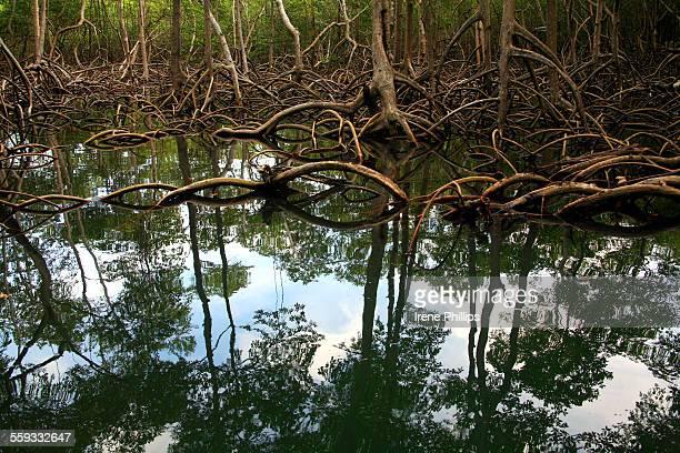 Mangroves, Los Haitises National Park