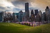 Manhattan View from Roosevelt Island with Cherry Blossoms
