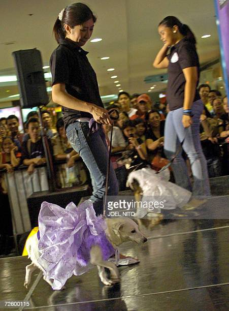 Abandoned native dogs with their new owners are displayed during the first native dog beauty pageant held inside a shopping mall in Manila 18...