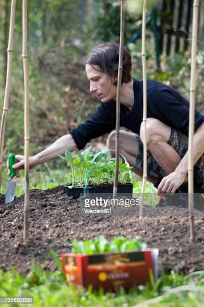 Mann gardening in allotment
