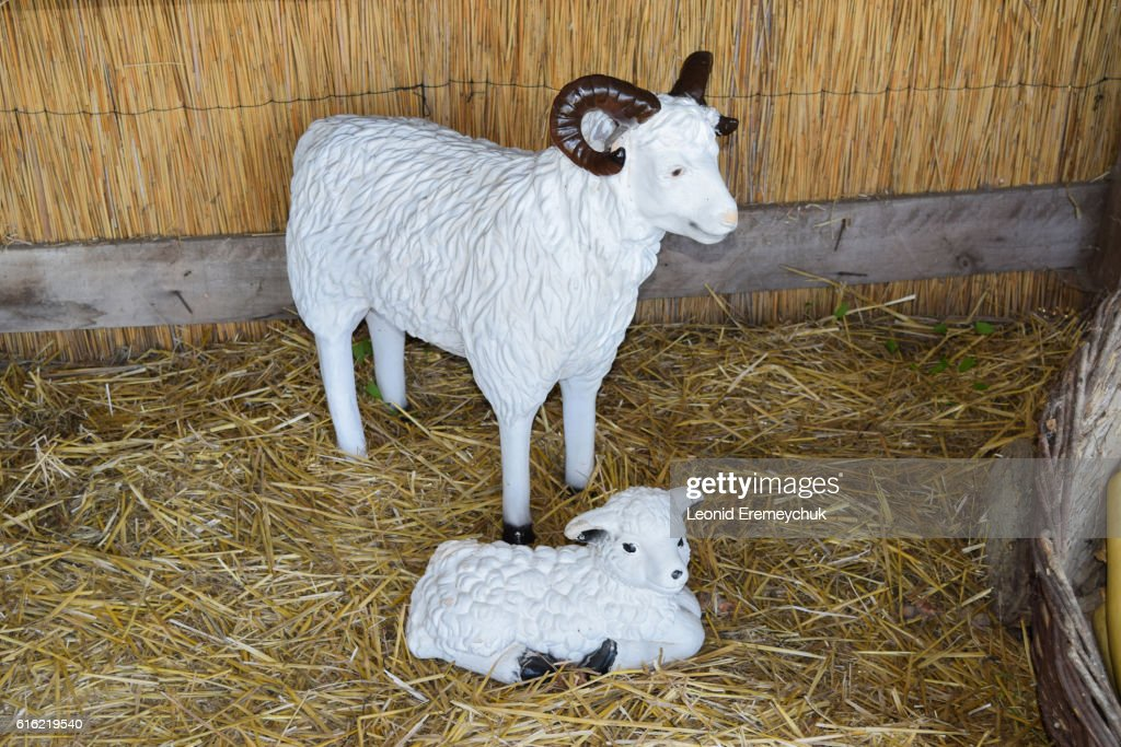 Mannequins and kid goats in the barn : Stock Photo
