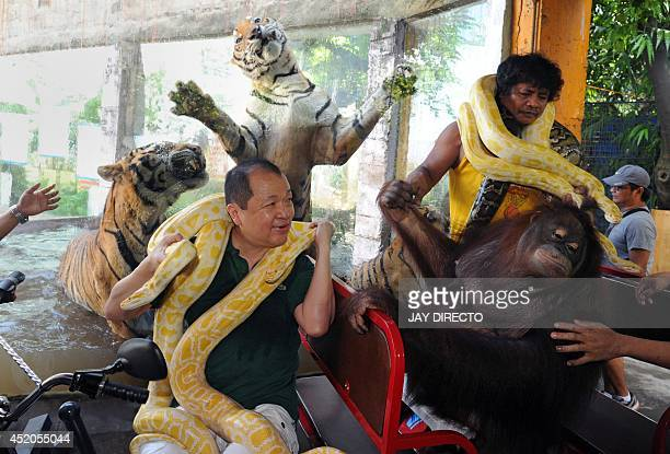 Manny Tangco owner of Manila's Malabon Zoo poses while sitting on an electric vehicle with the resident zoo orangutan Bengal tigers and an albino...
