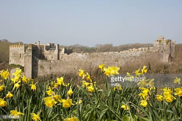 Manorbier Castle Pembrokeshire daffodils