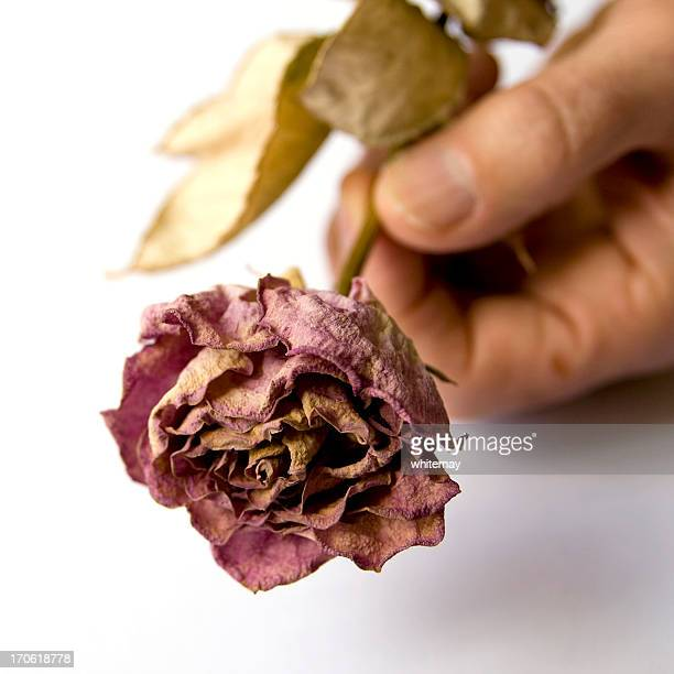 Man's hand holding a dead rose