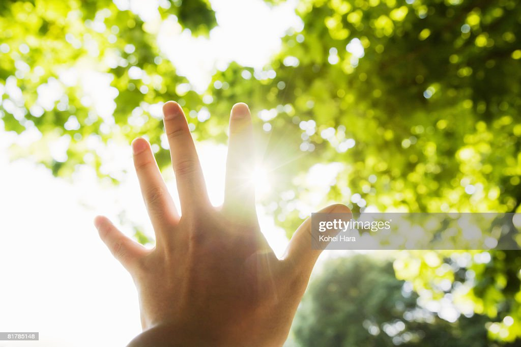 man's hand in back light in forest : Stock Photo