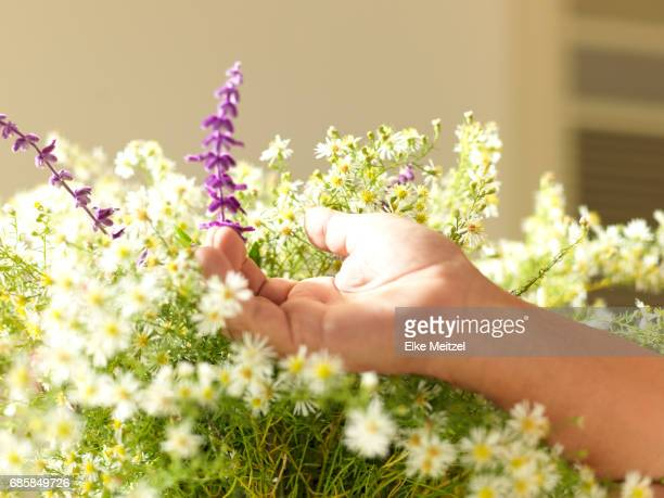 man's hand touching a bunch of flowers
