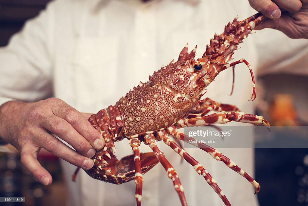 A man's hands holding a lobster : Stock Photo