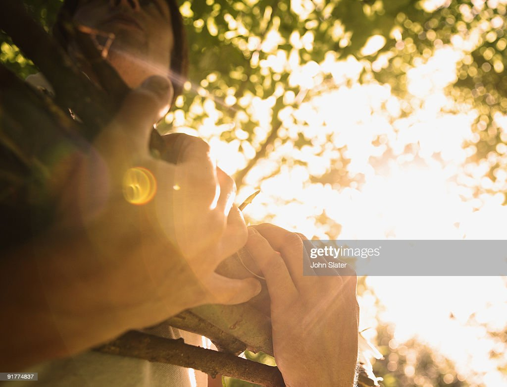man's hands holding firewood in sunlight : Stock Photo