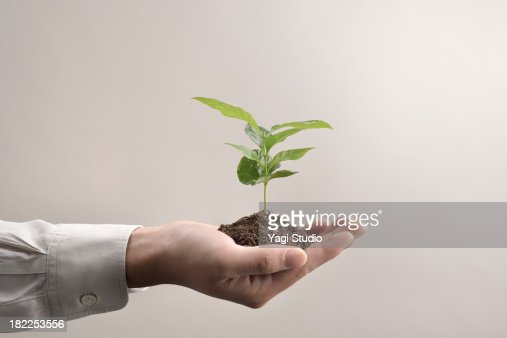 Man's hands holds small green plant seedling