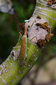 The mantis relaxes on a tree in the jungle