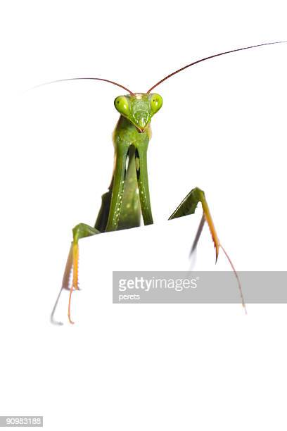 mantis look out
