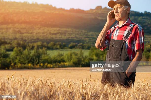 Manual worker using phone in the middle of wheat field