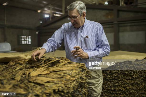 Manuel Quesada owner of Quesada Cigars inspects tobacco leaves at the company's facility in Santiago de los Caballeros Dominican Republic on Thursday...