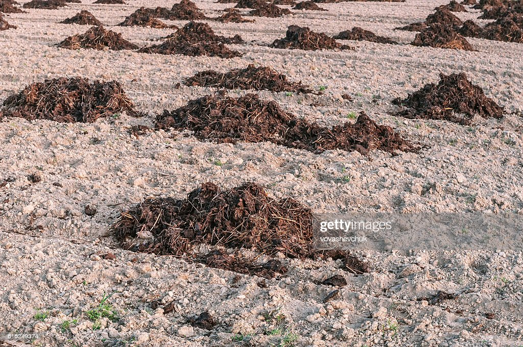 manure heaps in the field : Stock Photo