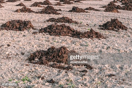 manure heaps in the field : Foto stock