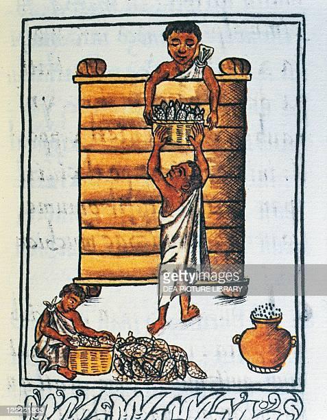 Manuscript Mexico 16th century Storage of corn in the barn From The Code of Florence 'Historia general de las cosas de Nueva Espana' by Fra...