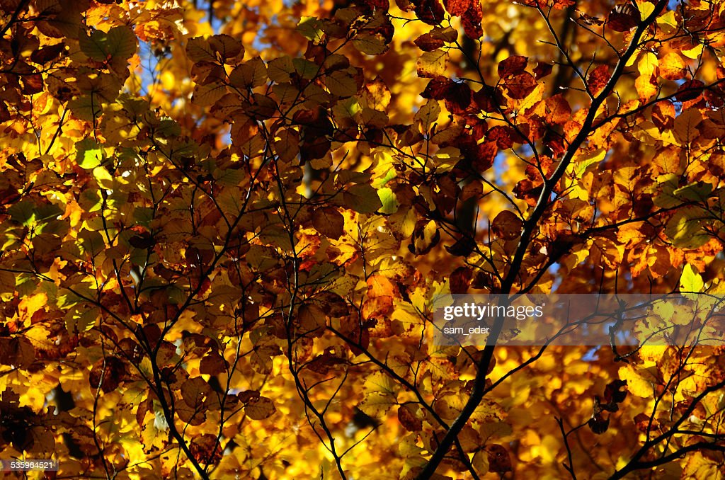 many colorful leaves in autumn : Stock Photo