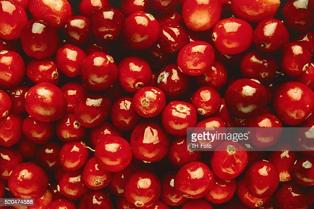 Many cowberries