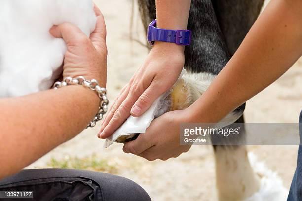 Viele Hände bringen Leichtigkeit-bandaging schlecht Ponys Fuß.