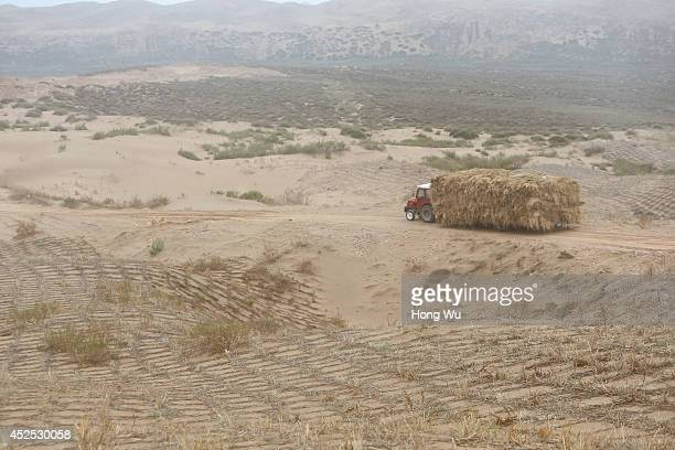 Many hay are transported on a tractor will be used for prevent the sand from floating with the wind at the edge of the expanding Maowusu Desert in...