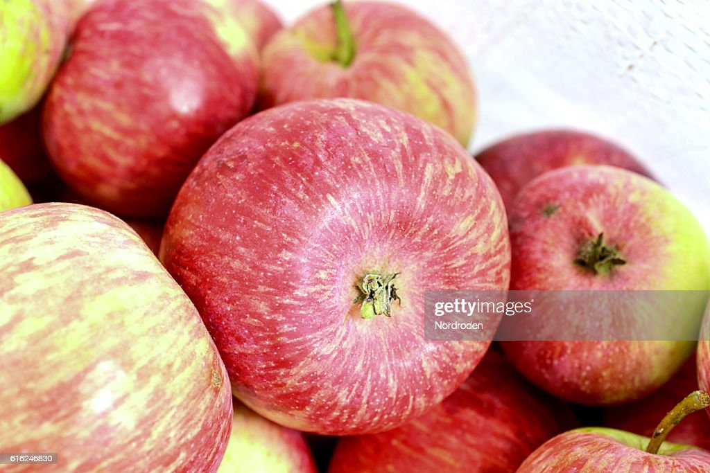 Many red apples : Stock Photo