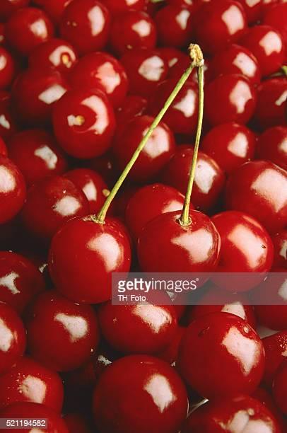 Many red cherries
