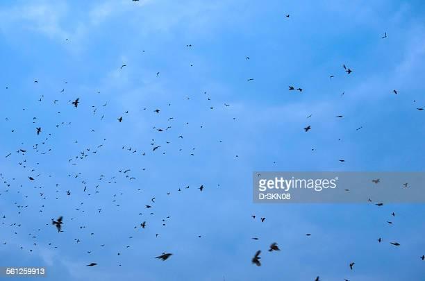 Many sparrow birds flying in sky