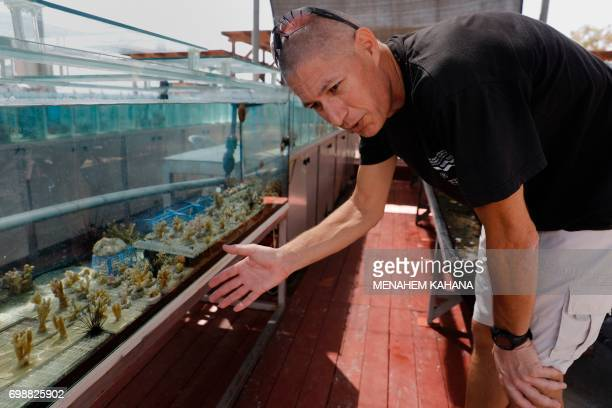 Maoz Fine a professor of marine biology from Israel's Bar Ilan university checks corals in an aquarium at the Interuniversity Institute for Marine...