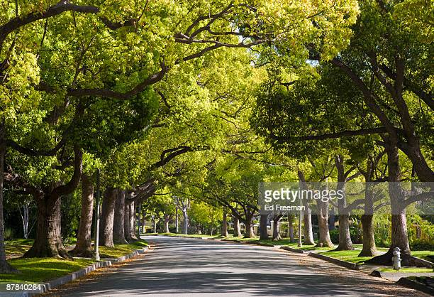 Maple Drive, Beverly Hills CA