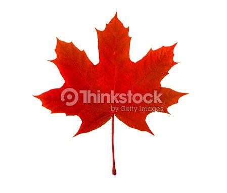 Maple Leaf Canadian Symbol On A White Background Stock Photo