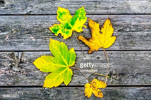 Maple leaves on wooden background : Stock Photo