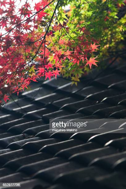 Maple Leaves over Roofing Tiles