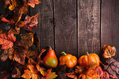 Maple tree and pumpkins