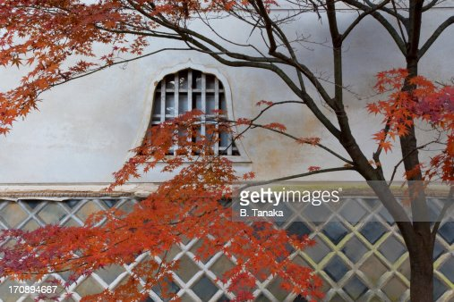 Maple Tree at Shinnyo-do Temple in Kyoto, Japan : Stock Photo