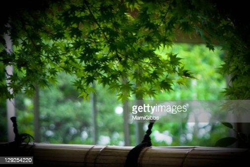 Maple tree in Japanes garden : Stock Photo