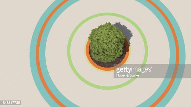 maple tree planted in colored circles