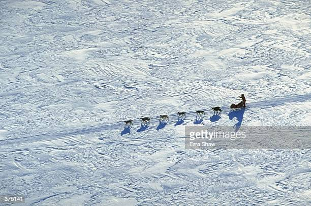 Jeff King mushes his team of Dogs across the tundra during the Iditarod Trail Race in Eagle Island Alaska Mandatory Credit Ezra O Shaw /Allsport