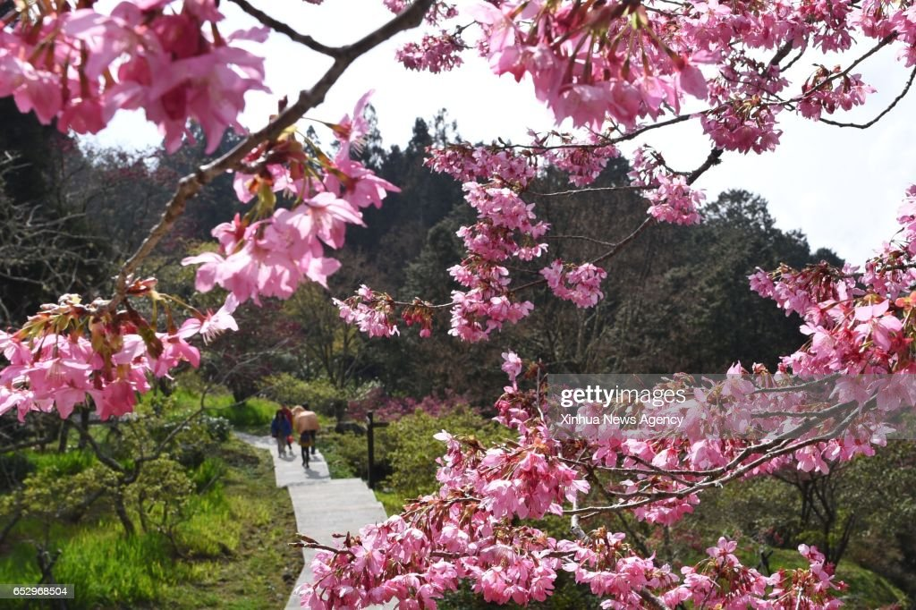 CHIAYI, March 13, 2017 -- People visit the Ali Mountains, southeast China's Taiwan, March 13, 2017.