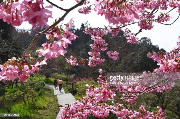 CHIAYI March 13 2017 People visit the Ali Mountains southeast China's Taiwan March 13 2017
