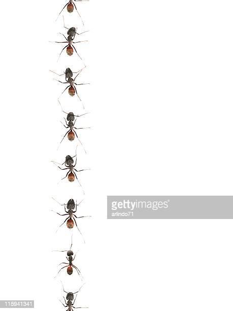 Défiler fourmis 01