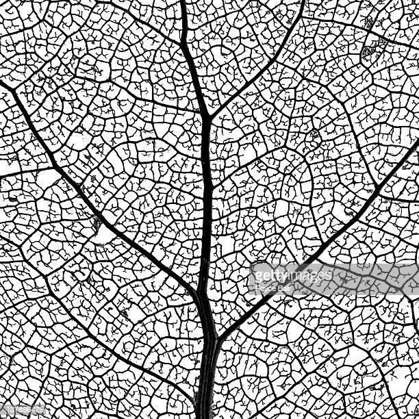 Marco image of leaf