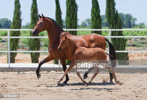 Mare & Foal Arena Trotting