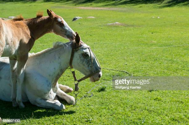 A mare and a foal at the Estancia Hotel Kau Yatun in El Calafate Argentina