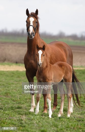 Mare and foal on the meadow