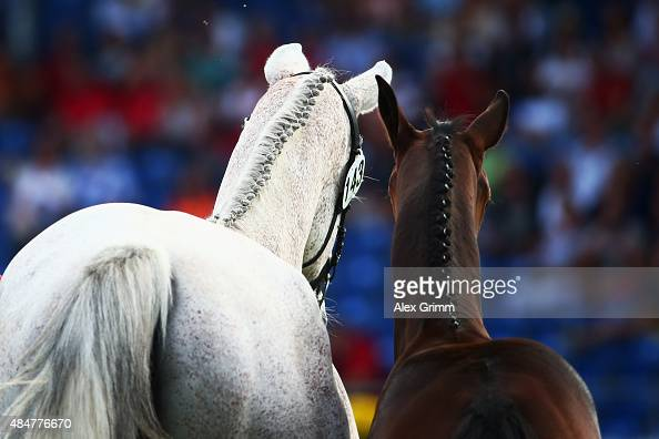 A mare and her foal trot through the arena during a break of the second round of the MercedesBenz Prize Show Jumping team competition on Day 10 of...