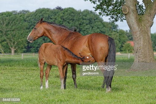 Germany, East Frisia, Mare with foal in pasture