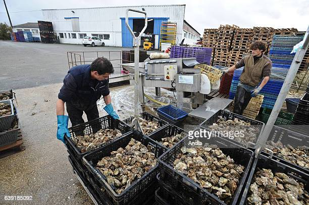 Freddy Privat's oyster company Taheron