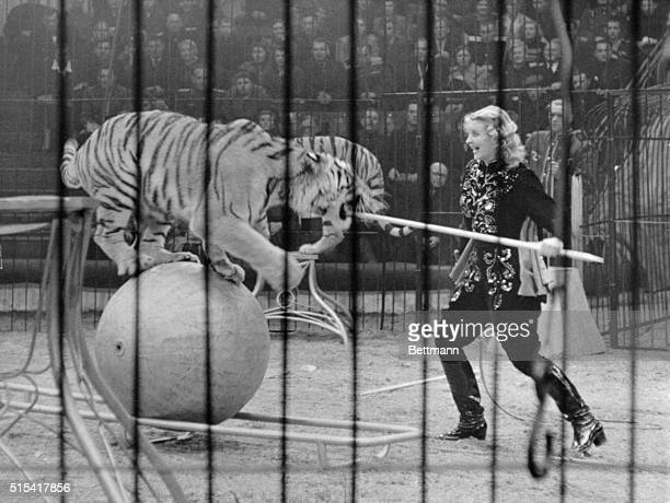 Margarit Nazarova wouldn't touch a tiger with a tenfootpole she prefers to get much closer than that to prod her four pets into action Here the...