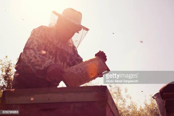 Mari beekeeper working with beehives outdoors
